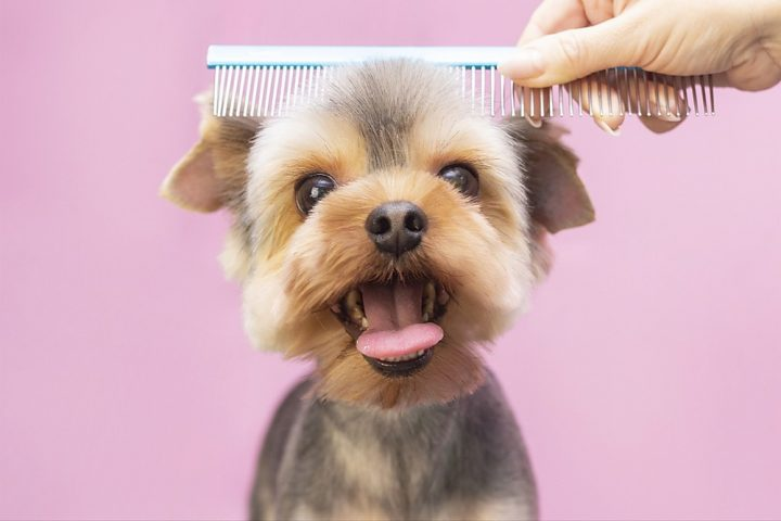 mobile pet grooming davie fl